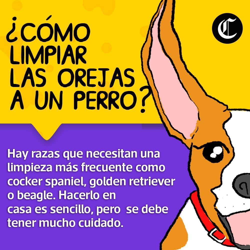 ¿Cómo limpiar las orejas a un perro?